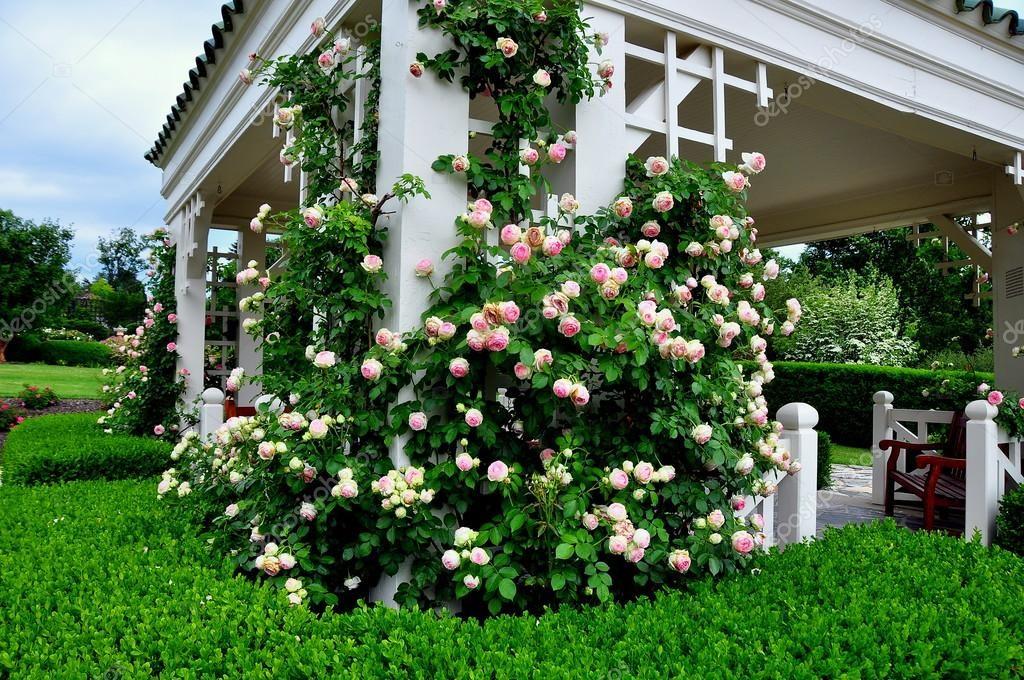 Натюрморты с розами масло фото