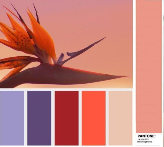 pantone-15-1520-blooming-dahlia-tsvetushhij-georgin-1024x559