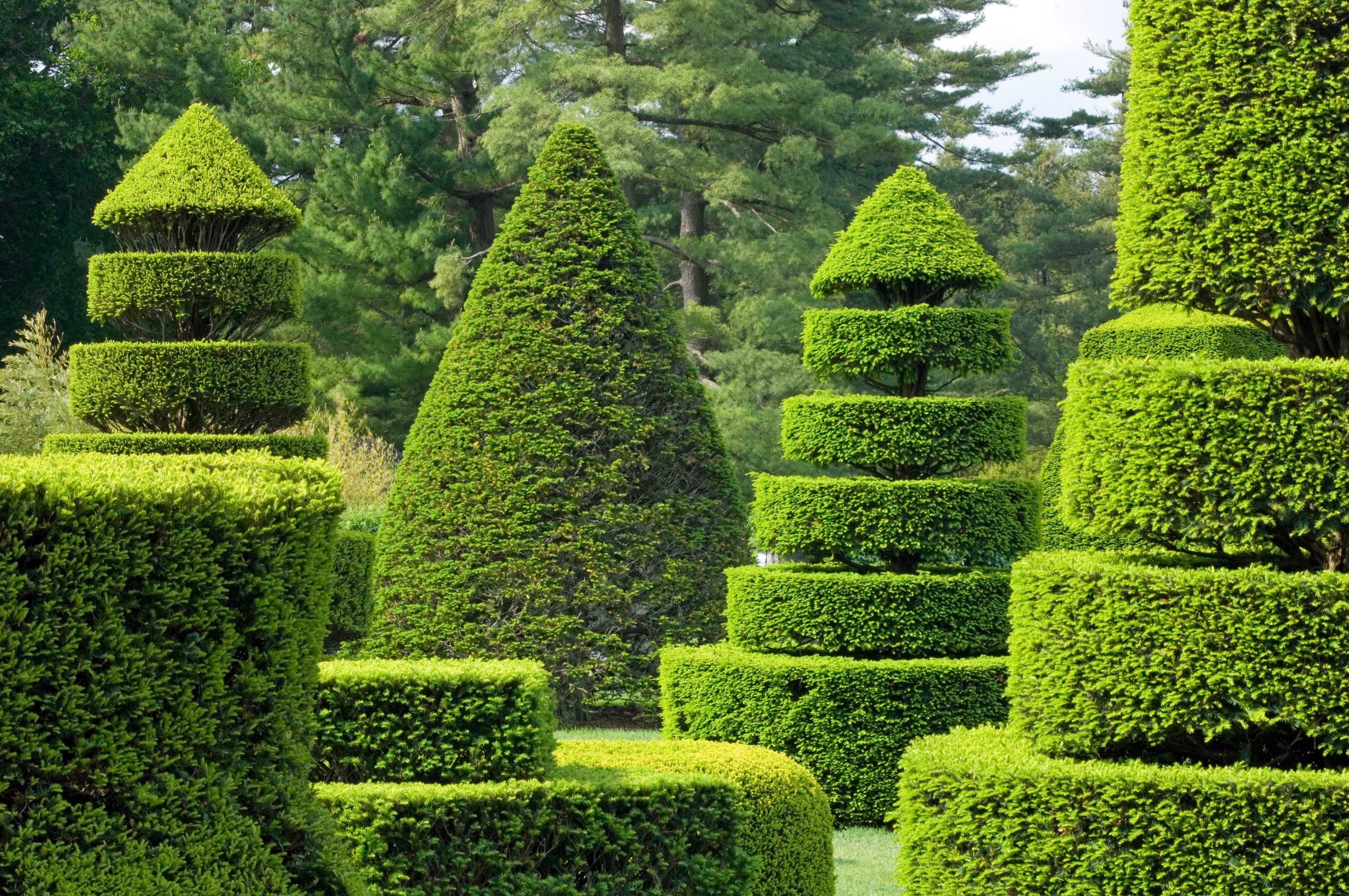 стрижка растений в саду фото раннее время