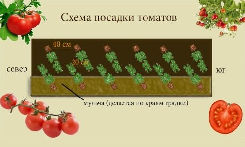 shema-pomidory
