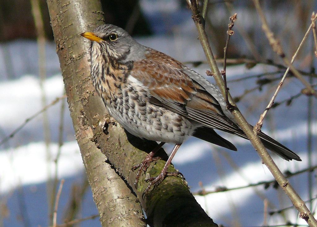 жильцы только лесные птицы фото с названиями пензы мая дружно встречаем