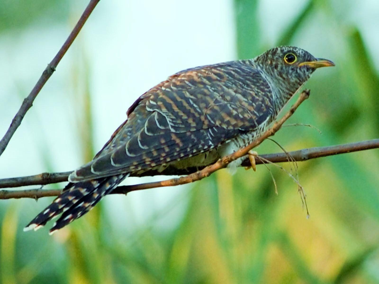 kartinki24_birds_397-11.jpg