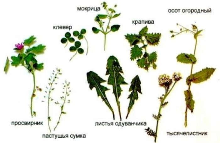 travi-dlya-krol