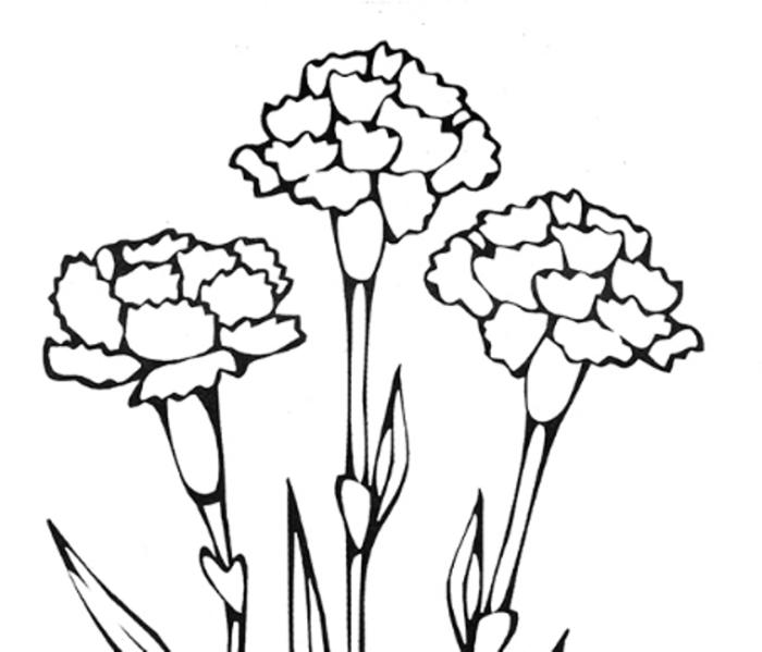 цветы гвоздика картинка раскраска преют