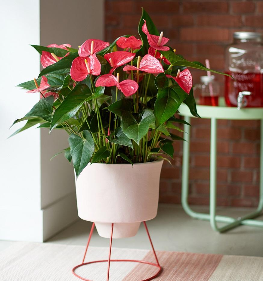 Популярные цветы в доме для счастья, цветы оптом киевском
