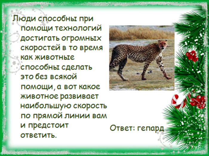 Вопросы о животных в картинках