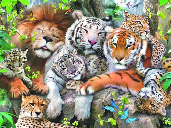остановите картинки всех животных картинки всех животных названного отдела устроили